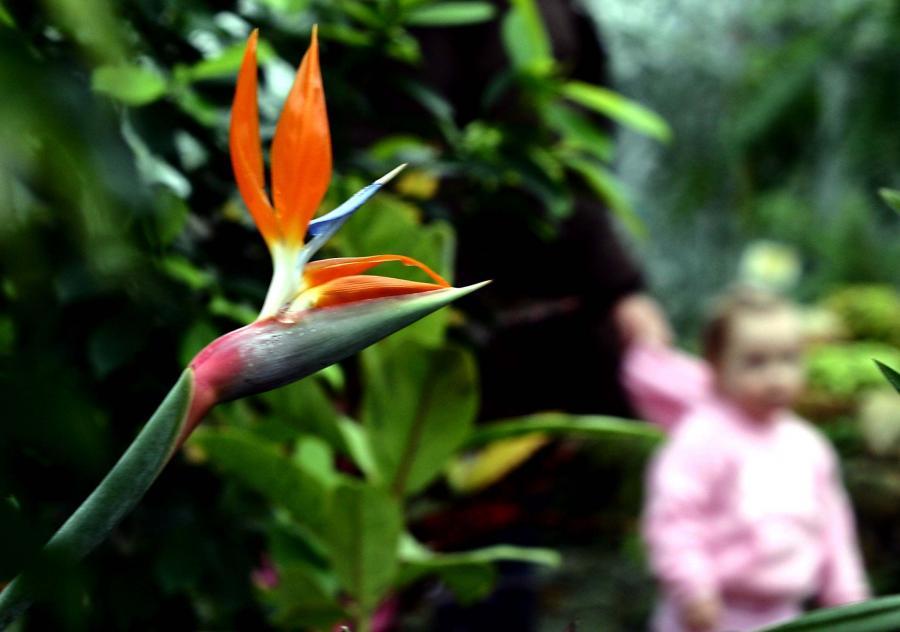 Powsin – ogród botaniczny
