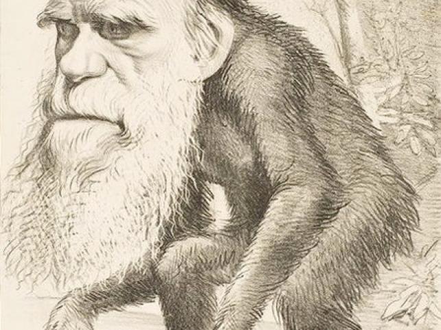 Darwin jako szympans