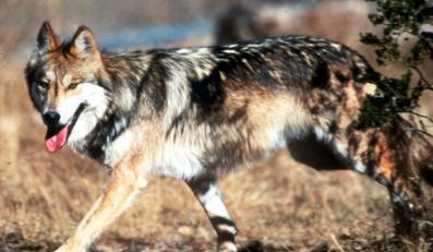 Amerykański rząd masowo zabija zwierzęta