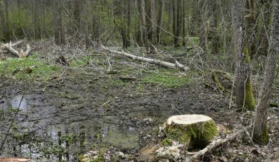Wysłali dziecko do lasu? Spędziło tam sześć dni