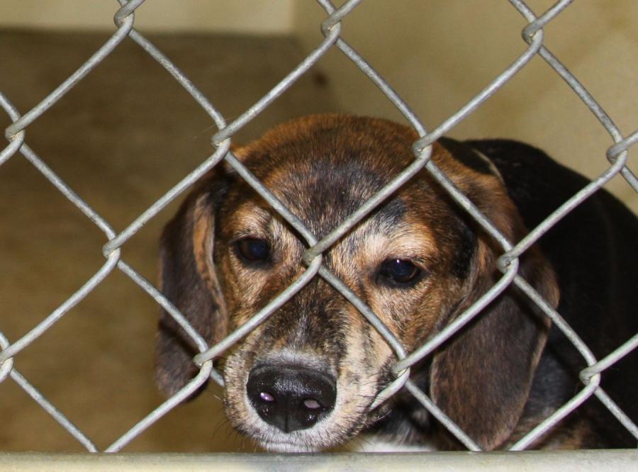 Pies w klatce - zdjęcie ilustracyjne
