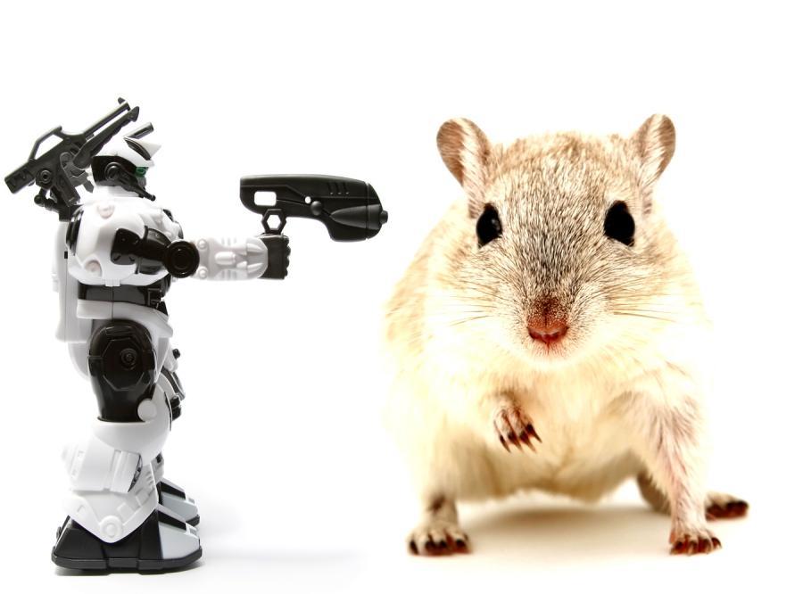 Mózg szczura pokieruje robotem