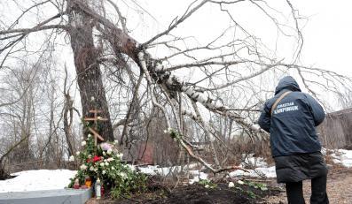 Złamana brzoza w Smoleńsku