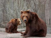 """Wszedł na wybieg niedźwiedzi w warszawskim zoo. """"Miał więcej szczęścia niż rozumu"""""""